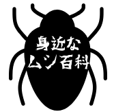 身近なムシ百科